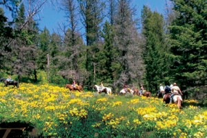 Shoshone Lodge & Guest Ranch - horseback riding :: Just outside the East gate of Yellowstone, this family-run lodge & guest ranch offers hand-built cabins & lodge, horseback riding, pack trips, hunting, delicious food & quiet.