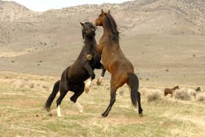 Cody Wyoming Adventures: Tours