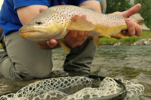 Yellowstone Fly Fishing Tours | Double Diamond X