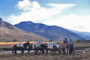 Bliss Creek Outfitters - Cody Pack Trips