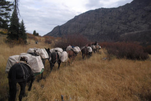Bliss Creek Outfitters - Horseback Pack Trips