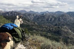 Llamas Unlimited - Cody Guided Llama Treks