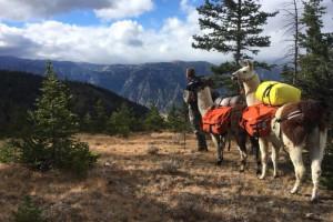 Llamas Unlimited - Cody Llama Pack Trips