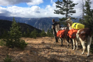Llamas Unlimited - Yellowstone Llama Guided Treks