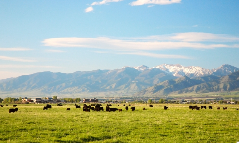 Places To Visit Bozeman Montana Alltrips