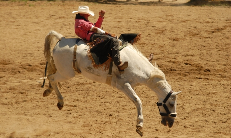 Cody Night Rodeo