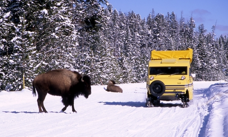 Snowcoach Tour Yellowstone