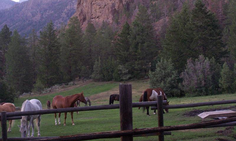 Horses at UXU Ranch in Wapiti